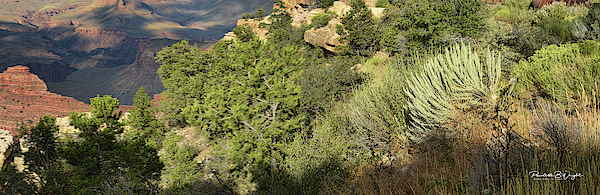 From Scrub And Pine To The Canyon Below Photograph