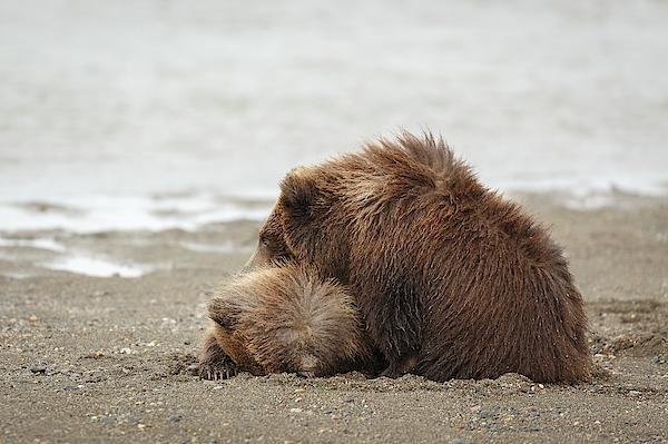 Ann Skelton - Furry Pillow