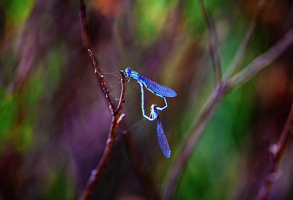 Anthony Jones - Heart of Dragonfly