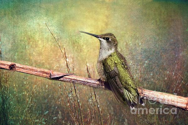 Karen Beasley - Hummingbird - Summer