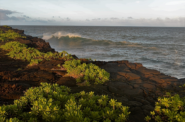 Heidi Fickinger - Late Afternoon Shoreline