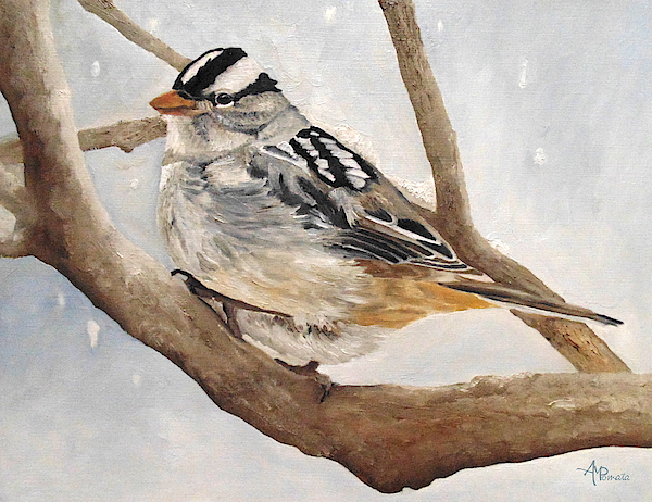 Angeles M Pomata - Let It Snow - White-crowned Sparrow