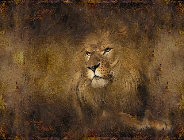 Lion 14 Digital Art
