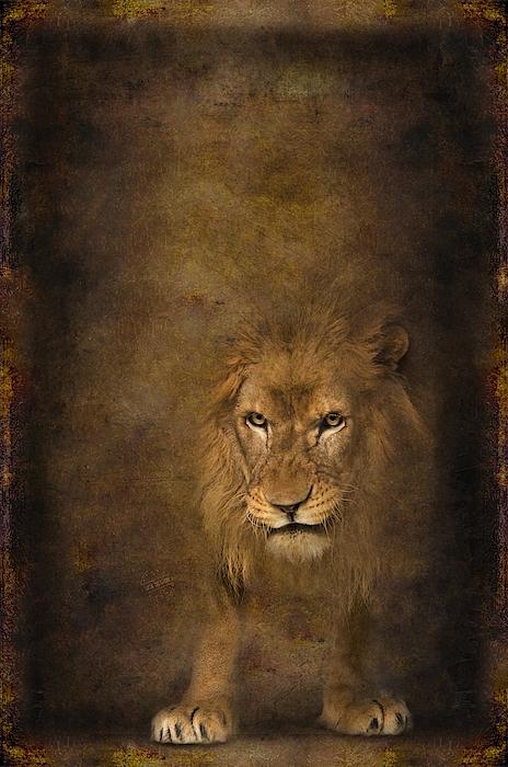 Lion 15 Digital Art