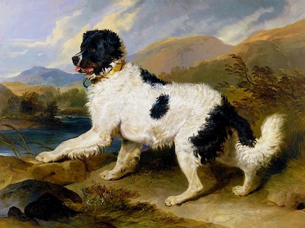 Edwin Henry Landseer - Lion, A Newfoundland Dog - Digital Remastered Edition
