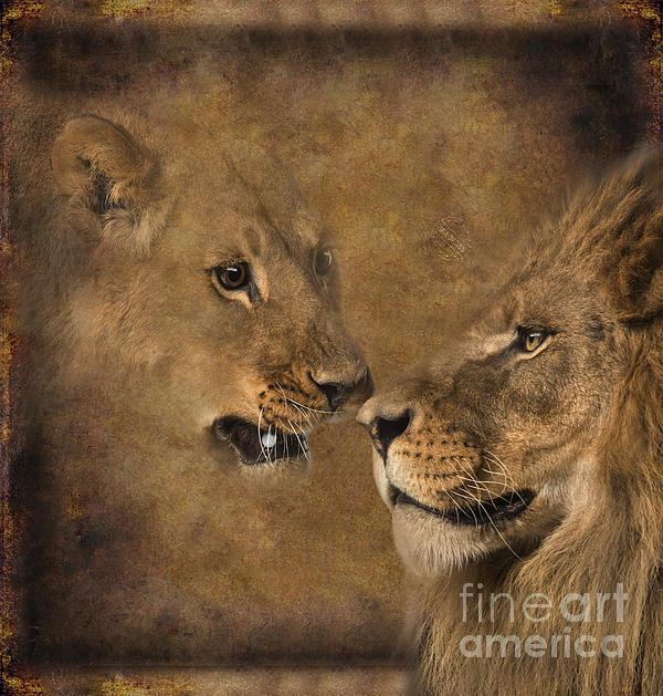Lion And Lioness 04 Digital Art