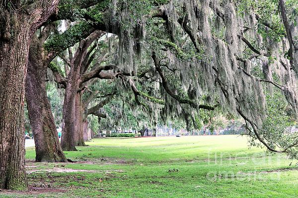 Diann Fisher - Live Oaks Of Forsyth Take A Bow