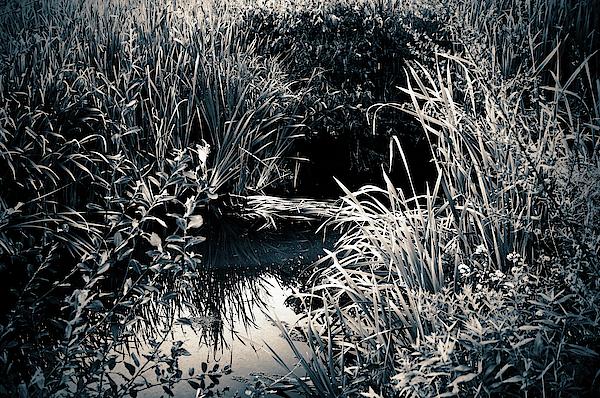 Elaine E Ford - Lush Marsh
