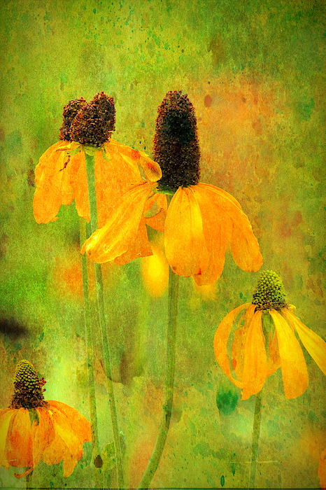 Geraldine Scull - Mexican hat sunflower collection