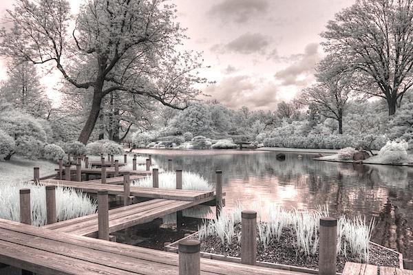 Jane Linders - Missouri Botanical Garden infrared photography st louis jane linders