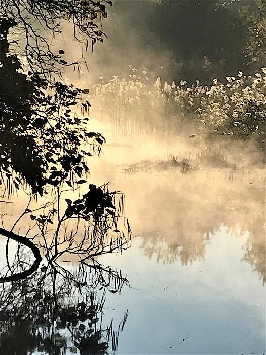 Roseann Amaranto - Misty Morning on the Cohansey