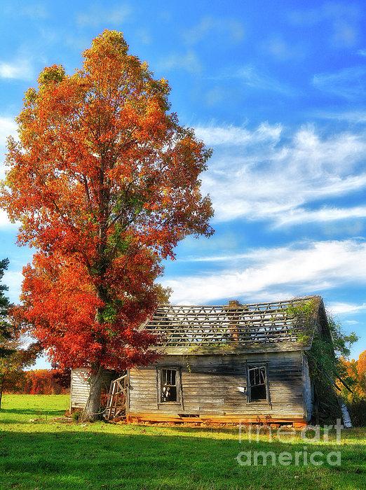 Dan Carmichael - Past its Prime Vintage Autumn Barn AP