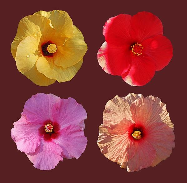 Power Flower Photograph