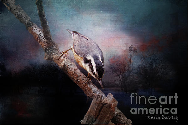 Karen Beasley - Red-breasted Nuthatch