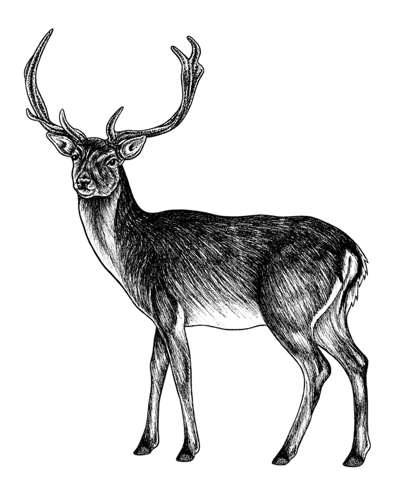 Sika Deer Stag Ink Illustration Hand Towel For Sale By Loren Dowding