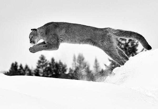 Art Cole - Snow Diving