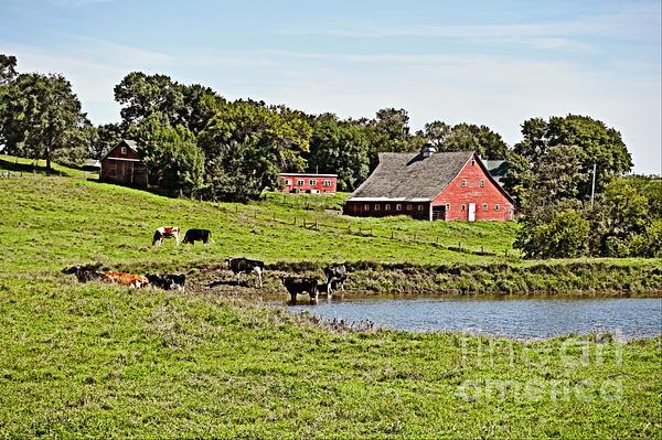 Kathy M Krause - South Dakota Farm