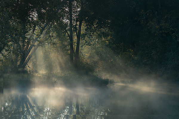 Robert Armitage - Sylvan Forest