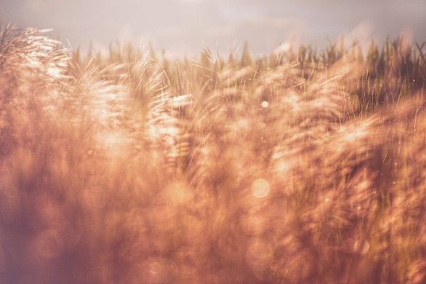 Jaroslav Buna - The Golden Morning 2