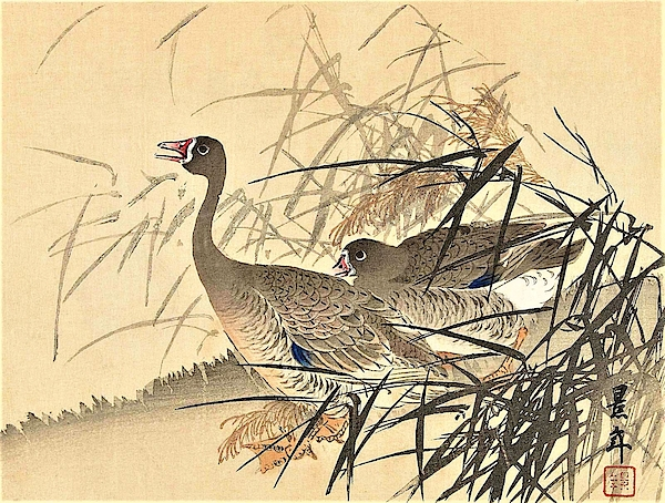 Imao Keinen - Top Quality Art - Keinen Kachoshokan 12view 10