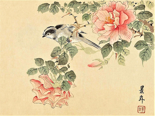 Imao Keinen - Top Quality Art - Keinen Kachoshokan 12view 4