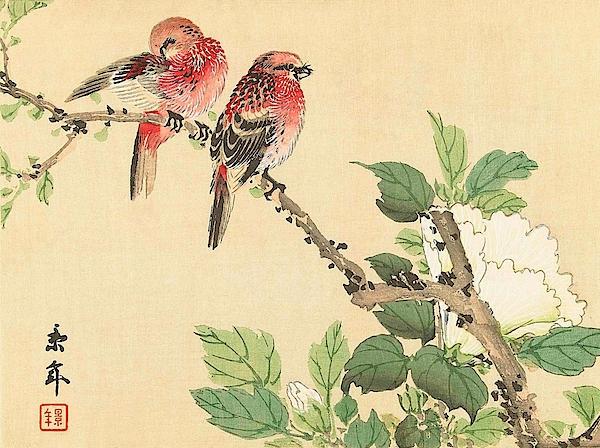 Imao Keinen - Top Quality Art - Keinen Kachoshokan 12view 6