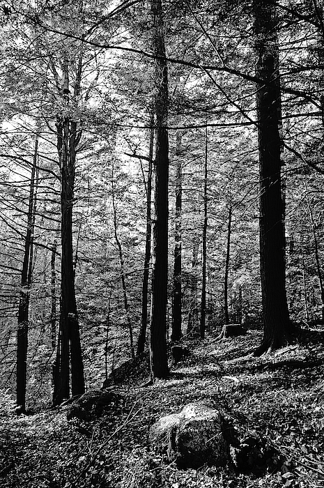 Elaine E Ford - Trinity of Trees