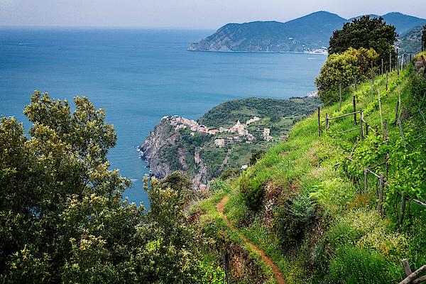 Joan Carroll - View of Corniglia Cinque Terre Italy II