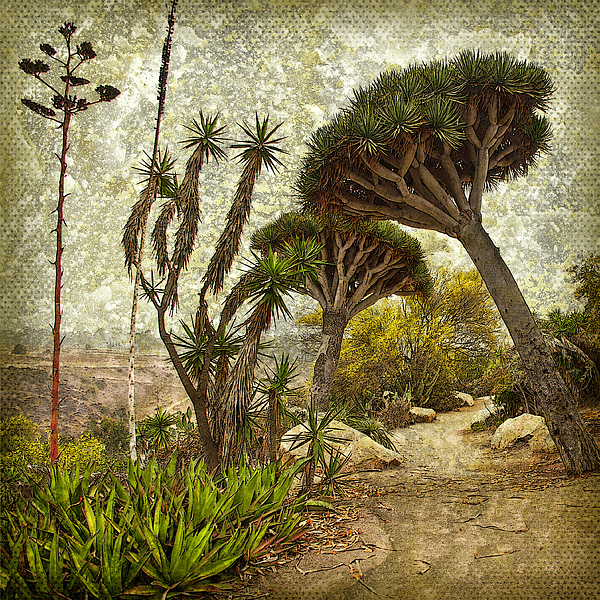 Denise Strahm - A Walk on the Wild Side - Cactus Garden, San Diego, California