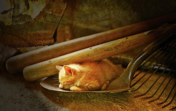 Patricia Keller - An Orange Kitten