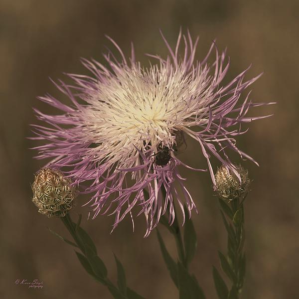 Karen Slagle - Basket Flower and Bug