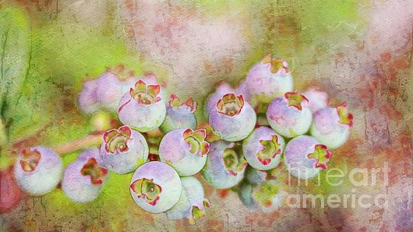 Jean OKeeffe Macro Abundance Art - Chippewa Blueberry Art