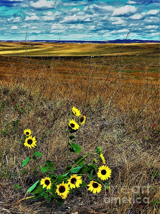 Suzanne Wilkinson - Custer National Monument Beauty