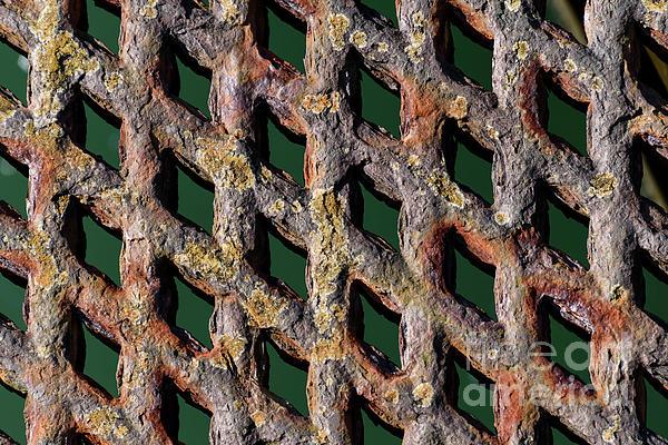 Wendy Wilton - Diamonds In The Rust