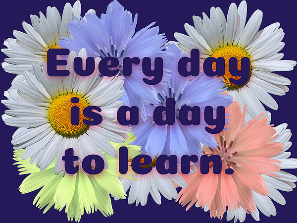 Kado Bay - Every Day Is a Day to Learn