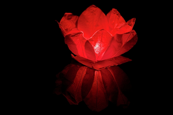 Joe Vella - Floating Chinese Lotus Flower Lantern.