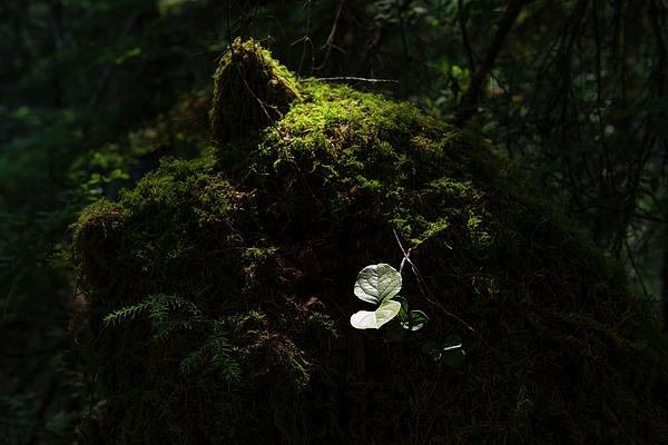 Doug LaRue - Forest Light