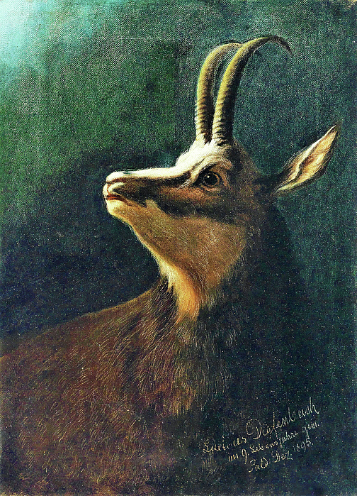 Karl Wilhelm Diefenbach - Head of a chamois - Digital Remastered Edition