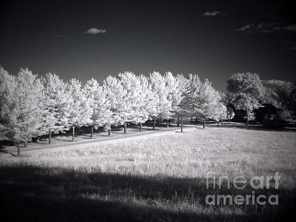 Rodger Painter - Infrared Driveway