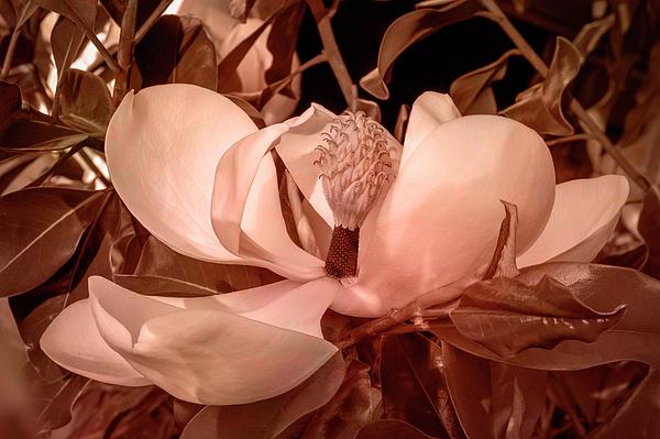Denise Harty - Monotone Magnolia