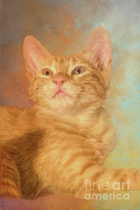 Elisabeth Lucas - Orange Tabby Kitten One