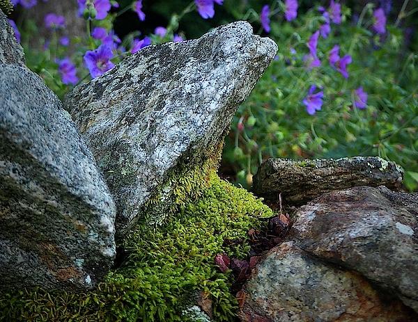 Alida M Haslett - Passage To A Garden