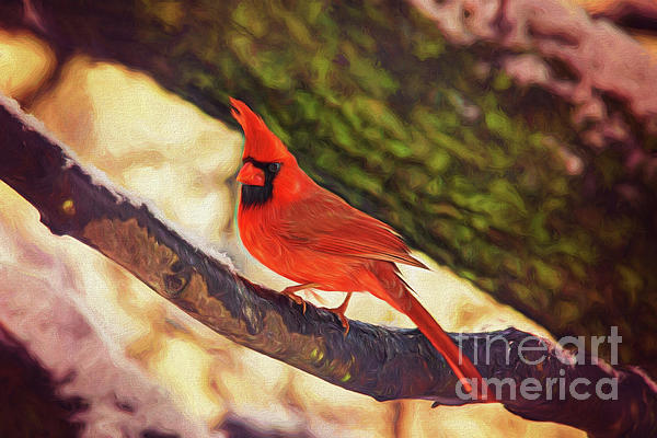 Sharon McConnell - Red Cardinal In Winter Tree Textured
