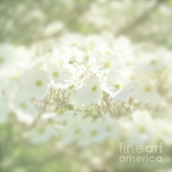 Luther Fine Art - Springtime Dogwood