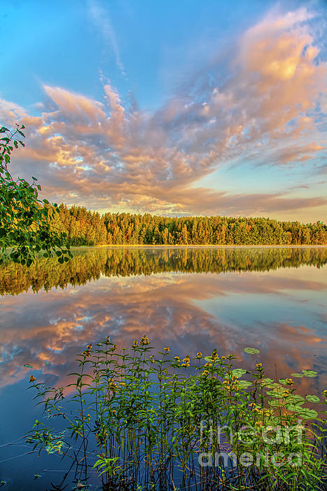 Veikko Suikkanen - The silence of the summer morning 2