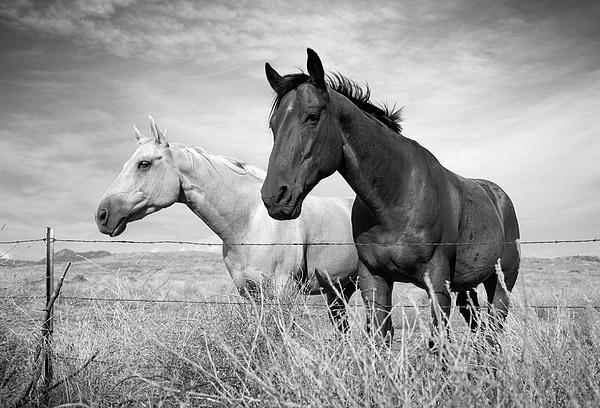 William Dunigan - Warner Springs Two Horses
