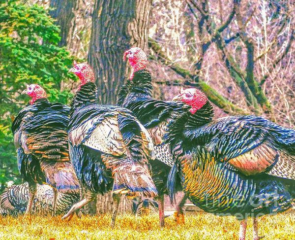 Wild And Whacky Turkeys Photograph