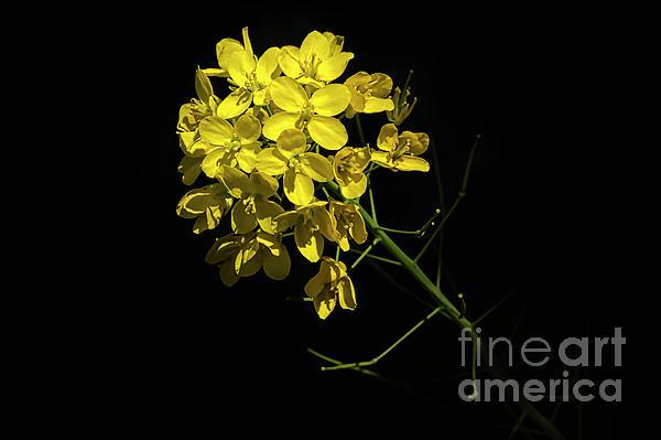 Lars Meis - Yellow Plant