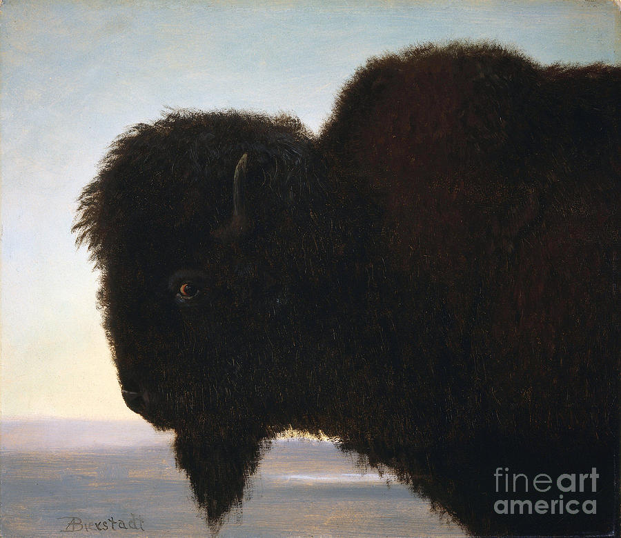 Albert Bierstadt Painting -  Buffalo Head by Celestial Images