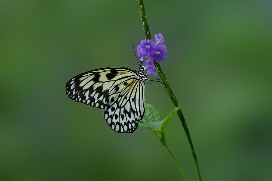 Butterfly Photograph -  Butterfly On Flower  by Sandy Keeton